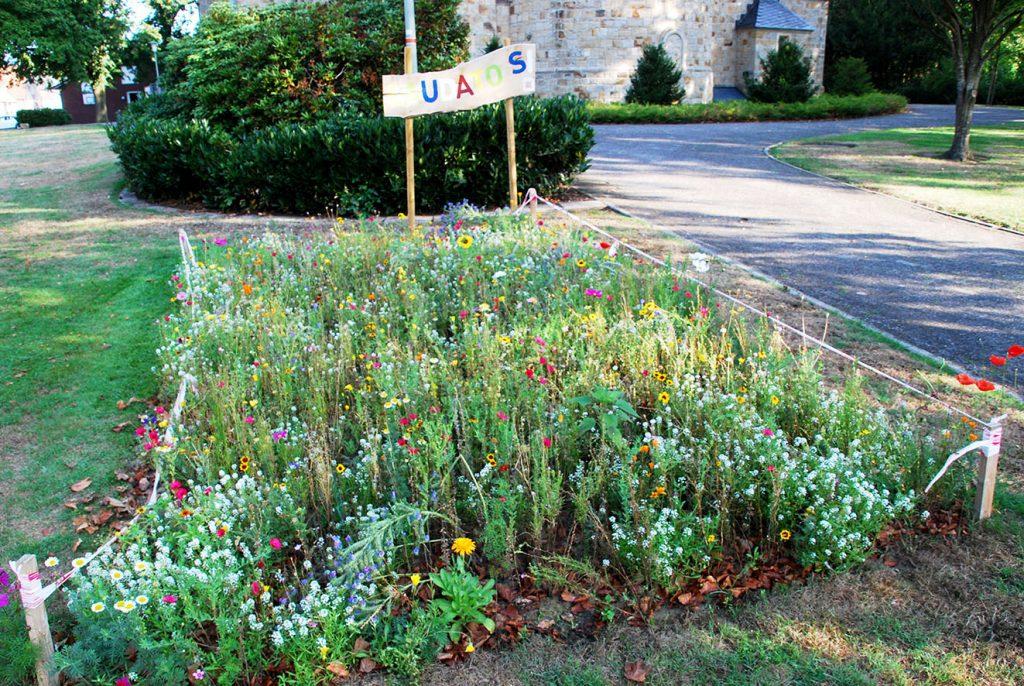 Blumenbeet in Hauenhorst